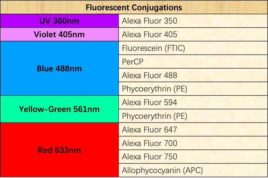 The fluorescent conjugations